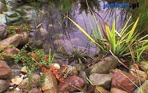Zima w ogrodzie. Jak przygotować oczko wodne do zimy?