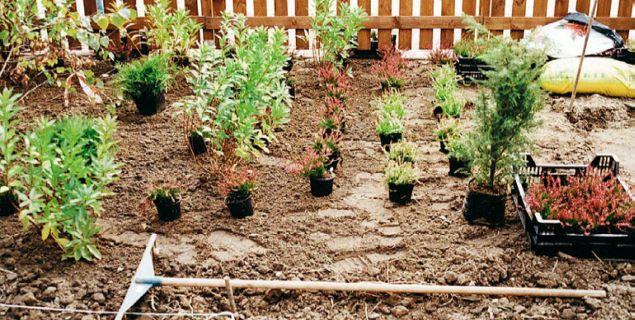 Sadzenie drzew i krzewów. Poradnik, jak posadzić roślinyw ogrodzie?