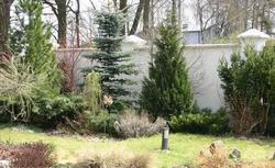 Odległość drzew od granicy działki. Sprawdź, jak blisko ogrodzenia możesz posadzić drzewa
