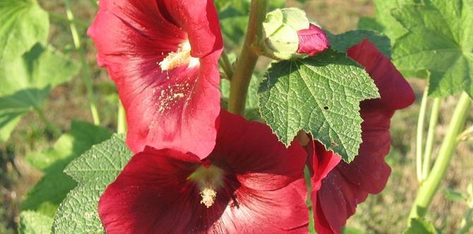 Czerwone kwiaty w ogrodzie - kolorowy powiew lata. Zdjęcia najpiękniejszych kwiatów w czerwieni
