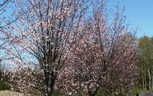 Przycinanie drzew owocowych - kiedy i jak to zrobić? [WIDEO]