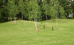 11 najczęstszych problemów z trawnikiem - przyczyny. Dlaczego trawa żółknie?