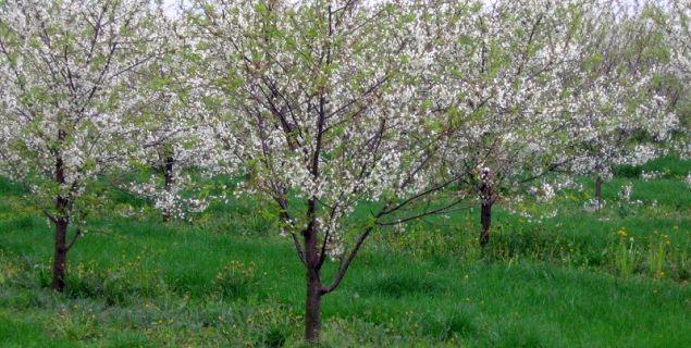 Wycinka drzew bez opłat. Jakie drzewa i krzewy można wyciąć bez zezwolenia